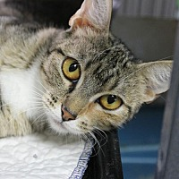 Adopt A Pet :: Clementine - Troy, IL