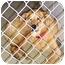 Photo 3 - Shepherd (Unknown Type)/Collie Mix Dog for adoption in Inman, South Carolina - Bob