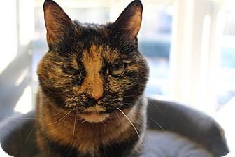 Domestic Shorthair Cat for adoption in Alpharetta, Georgia - Callie