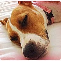Adopt A Pet :: Flip - Seattle, WA