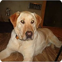 Adopt A Pet :: Jake - North Jackson, OH