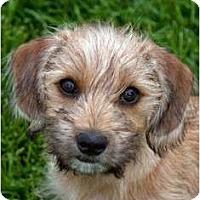 Adopt A Pet :: Sequoia - San Jose, CA