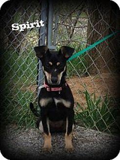 Terrier (Unknown Type, Small) Mix Dog for adoption in Atchison, Kansas - Spirit