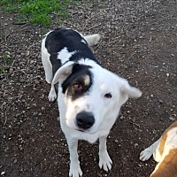 Adopt A Pet :: Jake - Red Bluff, CA