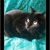 Adopt A Pet :: Baby Girl - Beaumont, TX
