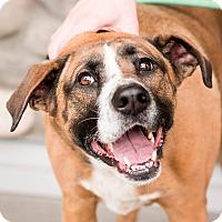 Adopt A Pet :: Mia - Vancouver, WA