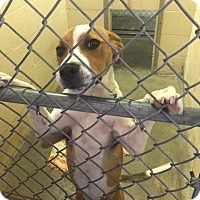 Adopt A Pet :: Sunny - Fayetteville, AR