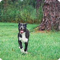Adopt A Pet :: Fritz - Clearwater, FL
