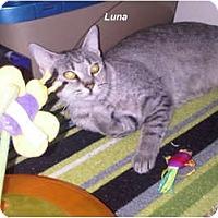 Adopt A Pet :: Luna - Jacksonville, FL