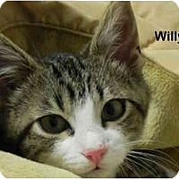 Adopt A Pet :: Willy - Portland, OR