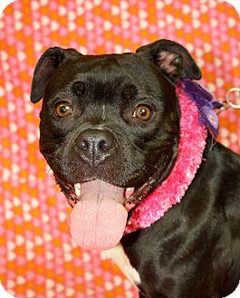Pit Bull Terrier Mix Dog for adoption in Jackson, Michigan - Greta
