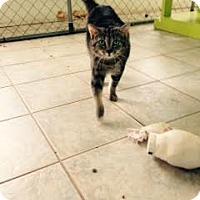 Adopt A Pet :: Elsa - East Smithfield, PA
