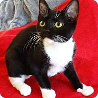 Adopt A Pet :: Amanda - N. Billerica, MA