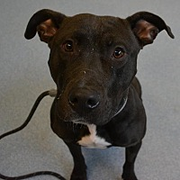 Adopt A Pet :: Onyx - Bay Shore, NY
