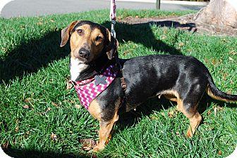 Dachshund Mix Dog for adoption in Richmond, Virginia - Hailey