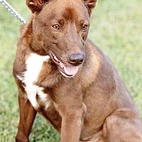 Adopt A Pet :: Chance - Transfer, PA