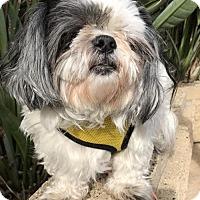 Adopt A Pet :: Sushi - Costa Mesa, CA