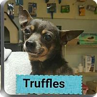 Adopt A Pet :: Truffle - Staley, NC