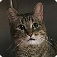 Adopt A Pet :: Daisy - Acme, MI