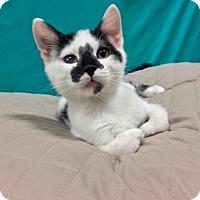 Adopt A Pet :: Jersey - Long Beach, CA