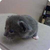 Adopt A Pet :: Luna - Princeton, WV