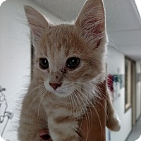 Adopt A Pet :: Redd Foxx - Casa Grande, AZ