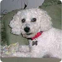 Adopt A Pet :: O'Grady - La Costa, CA