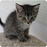 Adopt A Pet :: Freeway - Warren, MI
