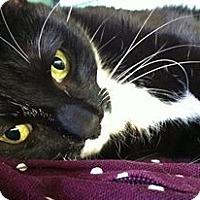 Adopt A Pet :: Hayward - Chicago, IL