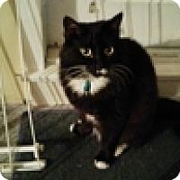 Adopt A Pet :: Elizabeth - Vancouver, BC