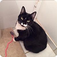 Adopt A Pet :: Kiri - Chicago, IL