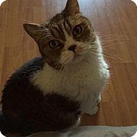 Adopt A Pet :: Azrael - Beverly Hills, CA