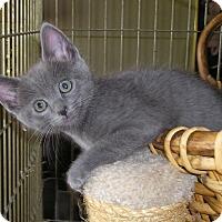 Adopt A Pet :: Nadia - Sherman Oaks, CA