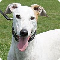 Adopt A Pet :: Lazy K Myth Cara (Carl) - Carol Stream, IL
