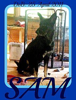 German Shepherd Dog Dog for adoption in Halifax, Nova Scotia - SAM