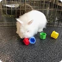 Adopt A Pet :: Viola - Hilliard, OH