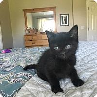 Adopt A Pet :: Legolas - Colorado Springs, CO