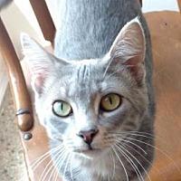 Adopt A Pet :: Ryman - South Amana, IA