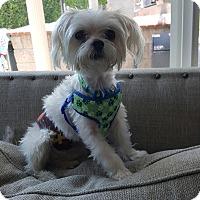 Adopt A Pet :: Pebbles - Covina, CA