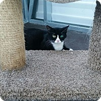 Adopt A Pet :: Twlight - Mims, FL