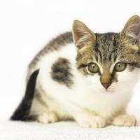 Adopt A Pet :: Harry Potter - Oxford, MS