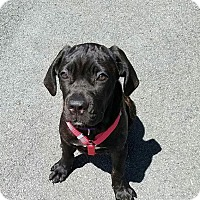 Adopt A Pet :: Vida - Virginia Beach, VA