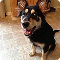 Adopt A Pet :: Lia - Hastings, NY