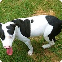 Adopt A Pet :: Owen - Silsbee, TX