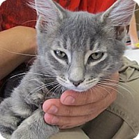 Adopt A Pet :: Stanley - Riverhead, NY