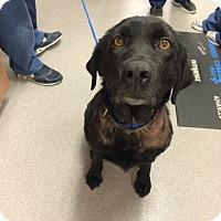Adopt A Pet :: Pepper B - Cumming, GA