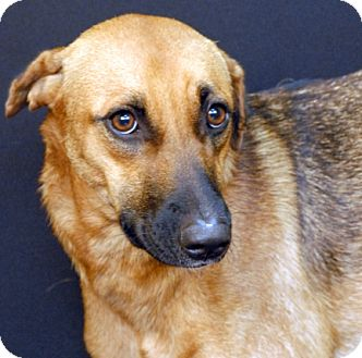 Shepherd (Unknown Type) Mix Dog for adoption in Newland, North Carolina - Mocha *Trained