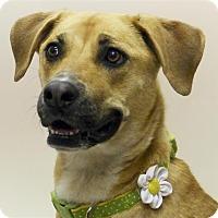 Adopt A Pet :: Junie - Sedona, AZ
