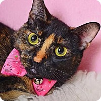 Adopt A Pet :: Marie - Chicago, IL