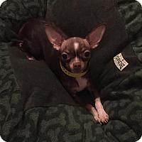 Adopt A Pet :: Piglet - Dallas, TX